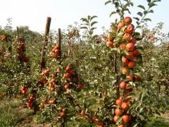 Appelboomgaard Broechem