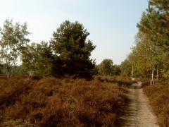 Kesselse Heide