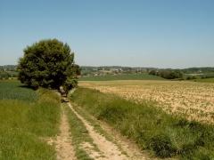 Brabants Plateau (blik achteruit)