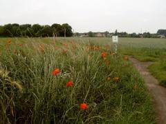 Onderweg naar Wommelgem