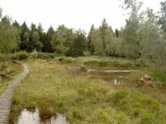 Etappe 1: Struffelt-Heide