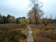 Struffelt-Heide