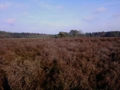 Heuvelse Heide