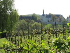Wijngaard en zicht op Mariënhof