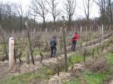 Door de wijngaard