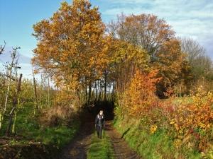 De zon komt erdoor - de paden zijn vaag erg modderig - heel wat holle wegen