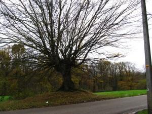 Uit welke film komt die boom ook alweer?