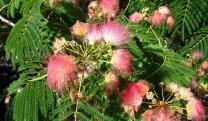Grote bloemenpracht begin juli