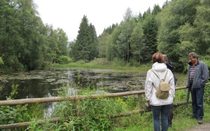 Stauweiher am Püngelbach