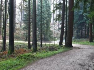 In het Zoniënwoud