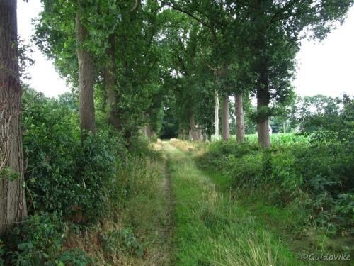 Nabij het Kasteel van Westmalle verschijnt er opnieuw bos in het landschap: hier op weg naar de Wolfskapel.