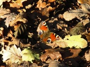 Vlinders in december